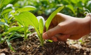 Naturbaustoffladen | Effektive Mikroorganismen
